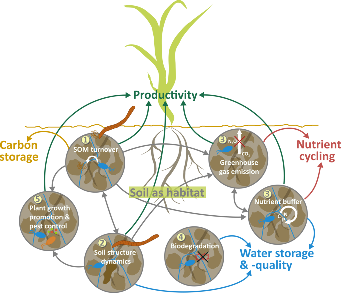 Coupling biotic and abiotic processes to represent the soil system and to predict changes in soil functions